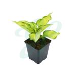Verschillende soorten vaste planten